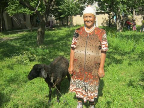 photo of Busazhida