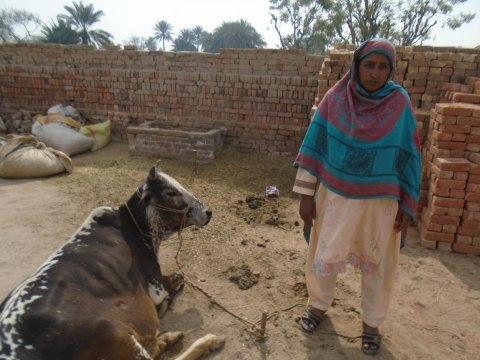 photo of Khursheed