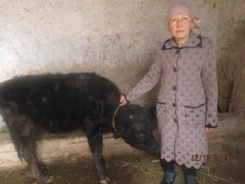 photo of Zeynepkan