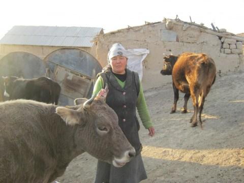 photo of Jyldyzgul