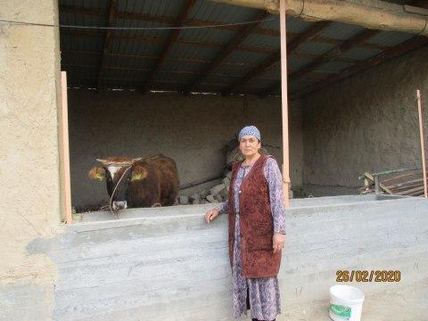 photo of Molakhat