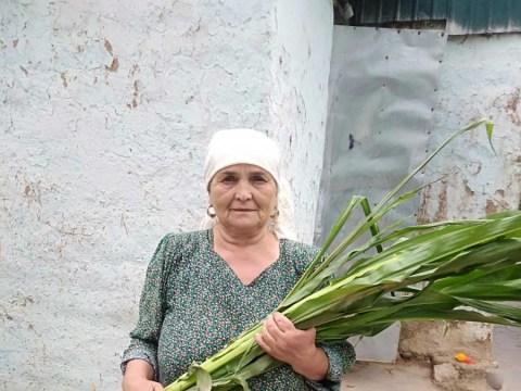 photo of Basvi