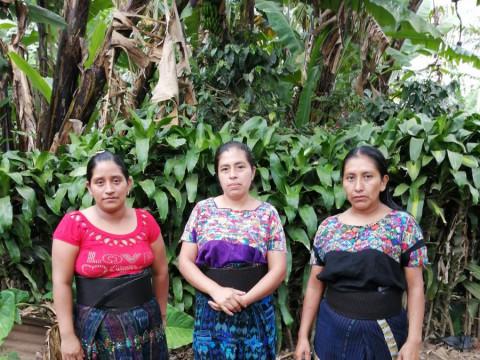 photo of Pochol Al Vencimiento Group