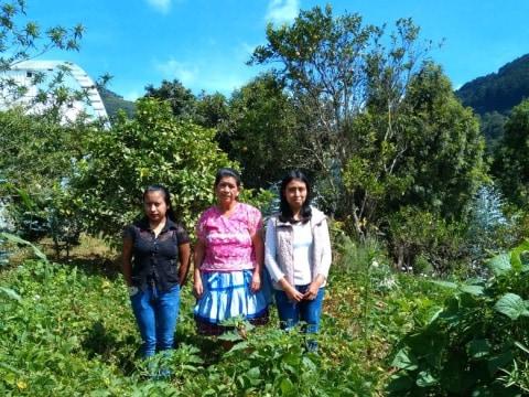 photo of Grupo Solidario Rosas De San Mateo Group